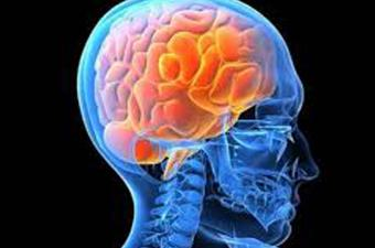 المخ ينتج السكر المرتبط بالسمنة